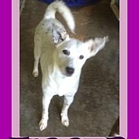 Adopt A Pet :: TIGGER - Sebec, ME