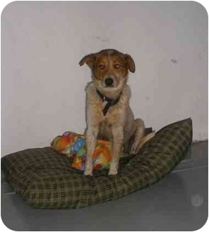 Australian Cattle Dog Mix Dog for adoption in Carthage, Texas - Eddy