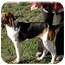 Photo 3 - Coonhound Mix Dog for adoption in Blackstone, Virginia - BoJo