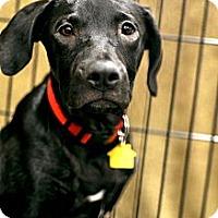 Adopt A Pet :: CHER - Irving, TX