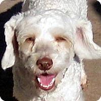 Adopt A Pet :: Gabe - Oakley, CA