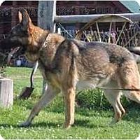 Adopt A Pet :: Obi - Hamilton, MT