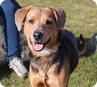 Beagle Mix Dog for adoption in Elyria, Ohio - Flower