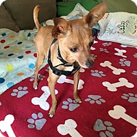 Adopt A Pet :: Bennett - Brooksville, FL