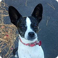 Adopt A Pet :: Lacey - Smart & Sweet - Bend, OR