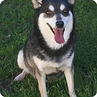 Adopt A Pet :: Runt - Lufkin, TX