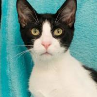 Adopt A Pet :: JV - Santa Fe, TX