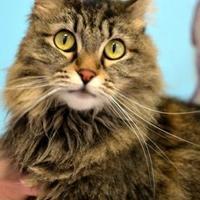 Adopt A Pet :: Tiga - Redmond, OR