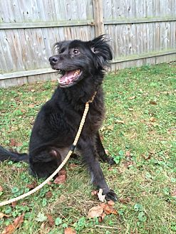 Collie Mix Dog for adoption in New York, New York - Olive