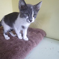 Adopt A Pet :: Paxton - Coos Bay, OR