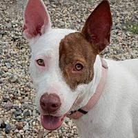 Adopt A Pet :: Lulu - Long Beach, NY