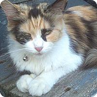 Adopt A Pet :: Misty - Syracuse, NY