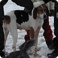 Adopt A Pet :: Rose - Hamilton, ON