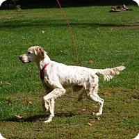Adopt A Pet :: AnnaBell - Toledo, OH