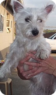 Terrier (Unknown Type, Medium) Dog for adoption in Greenville, Kentucky - chloe