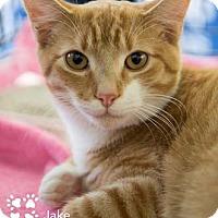 Adopt A Pet :: Jake - Merrifield, VA
