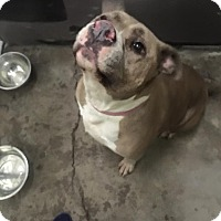 Adopt A Pet :: Princess - East McKeesport, PA