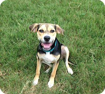 Beagle/Shepherd (Unknown Type) Mix Dog for adoption in Huntsville, Alabama - Zooey