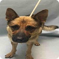 Adopt A Pet :: ATHENA - Tully, NY