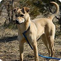 Adopt A Pet :: Aeril - Polson, MT