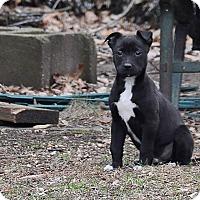 Adopt A Pet :: Lucky Day - Millersville, MD