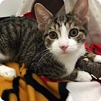 Adopt A Pet :: PJ - LaGrange Park, IL