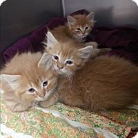 Adopt A Pet :: Oakly - Chippewa Falls, WI