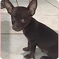 Adopt A Pet :: Ella - Homestead, FL