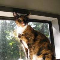Adopt A Pet :: Kayla - Greensboro, NC