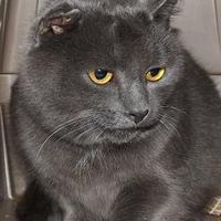 Adopt A Pet :: Chopin - Orleans, VT