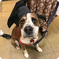 Adopt A Pet :: Sun - Boulder, CO