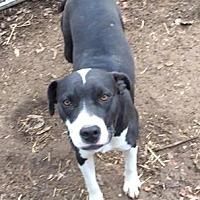 Adopt A Pet :: Jodie - Holly Springs, MS