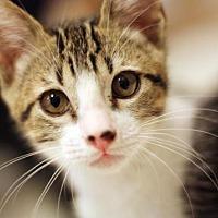 Adopt A Pet :: Caleb - San Diego, CA