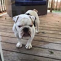Adopt A Pet :: Odie - Columbus, OH