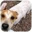 Photo 1 - Australian Cattle Dog/Hound (Unknown Type) Mix Dog for adoption in Phoenix, Arizona - Sid **ADOPTION PENDING**