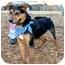 Photo 3 - German Shepherd Dog Mix Dog for adoption in Cincinnati, Ohio - Leon