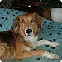 Adopt A Pet :: Eric Spencer - Indiana, IN