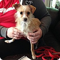 Adopt A Pet :: Sochi - Hamilton, ON
