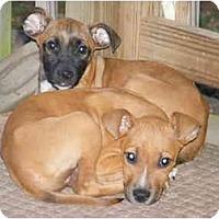 Adopt A Pet :: Scissors&Wizzers - E Windsor, CT