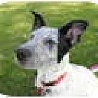 Adopt A Pet :: Jill ADOPTION PENDING - Phoenix, AZ