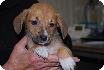 Hound (Unknown Type) Mix Puppy for adoption in Waupaca, Wisconsin - Slinky