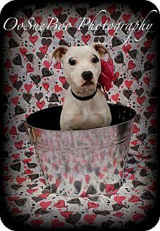 Pug Mix Dog for adoption in Detroit, Michigan - Darla