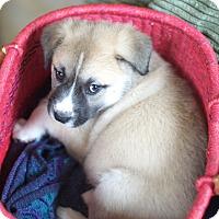 Adopt A Pet :: Enigma - Evergreen, CO