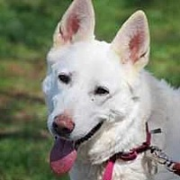 Adopt A Pet :: Sheila - Coopersburg, PA