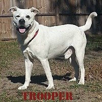 Adopt A Pet :: TROOPER - Golsboro, NC