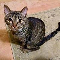 Adopt A Pet :: Willow - LaGrange Park, IL