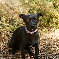 Adopt A Pet :: Sally - Auburn, CA