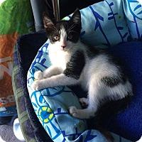 Adopt A Pet :: SaddleBack - Chesapeake Beach, MD