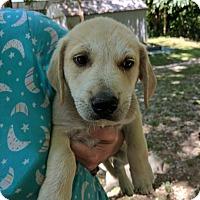 Adopt A Pet :: Waffles - Hohenwald, TN