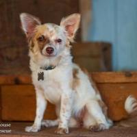 Adopt A Pet :: Wallowa - Eugene, OR